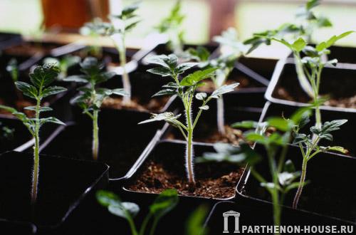 Растения в парнике